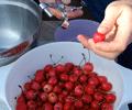kuvar - recept dana - RAKIJA SA DIVLJIM TREŠNJAMA